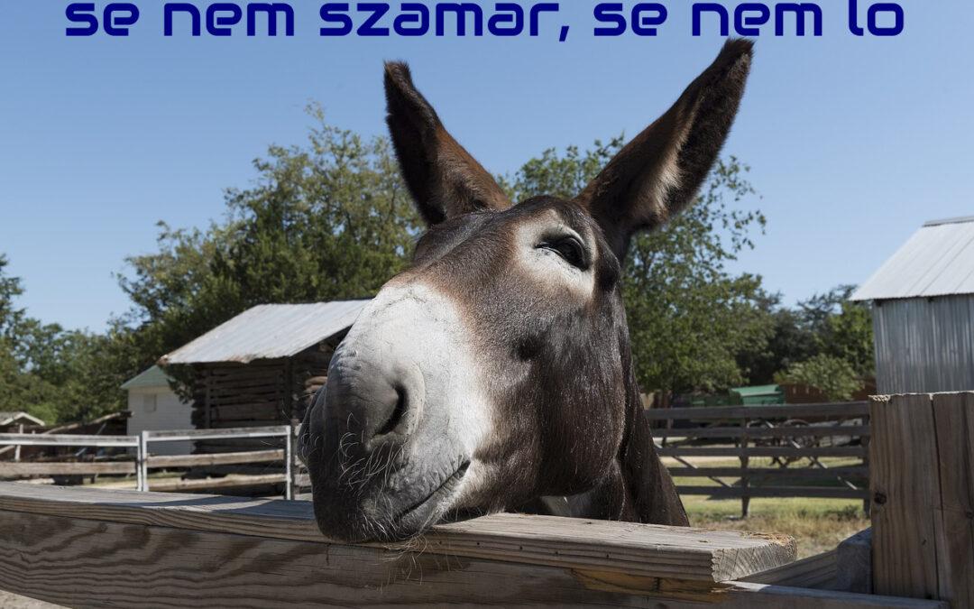 Se nem szamár, se nem ló